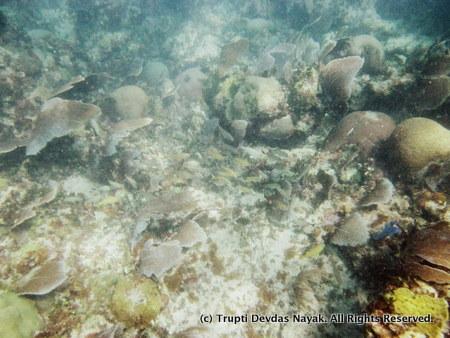 SnorkelingPuertoMorelos
