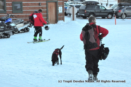 Avalanche Dog Demo