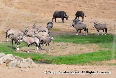Wildlife in Africa!