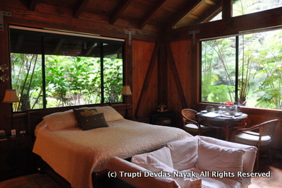 Lovely-Bedroom-Rainforest-Setting